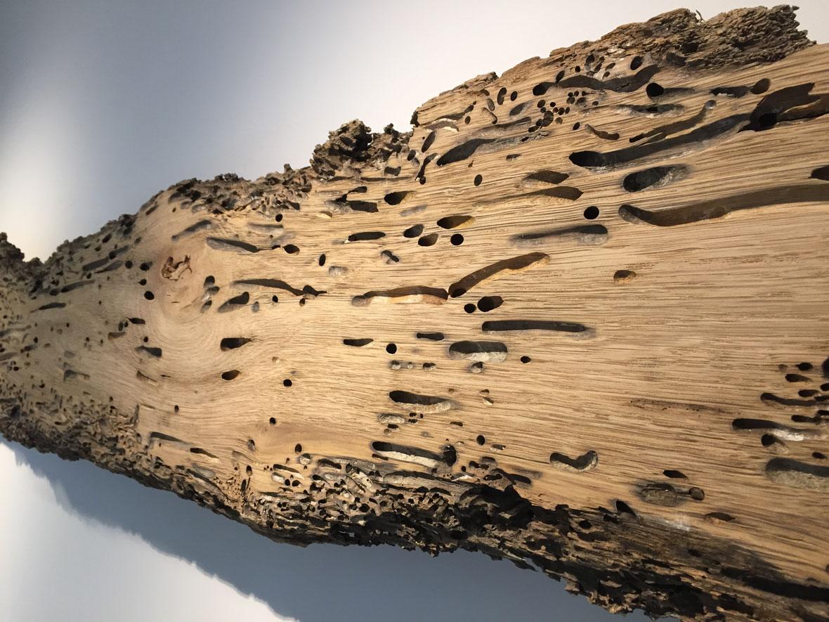 Besondere und seltene Holzbohle als Wanddekoration im Besprechungsraum von Bestattungen Katzbach & Düferenne in Solingen
